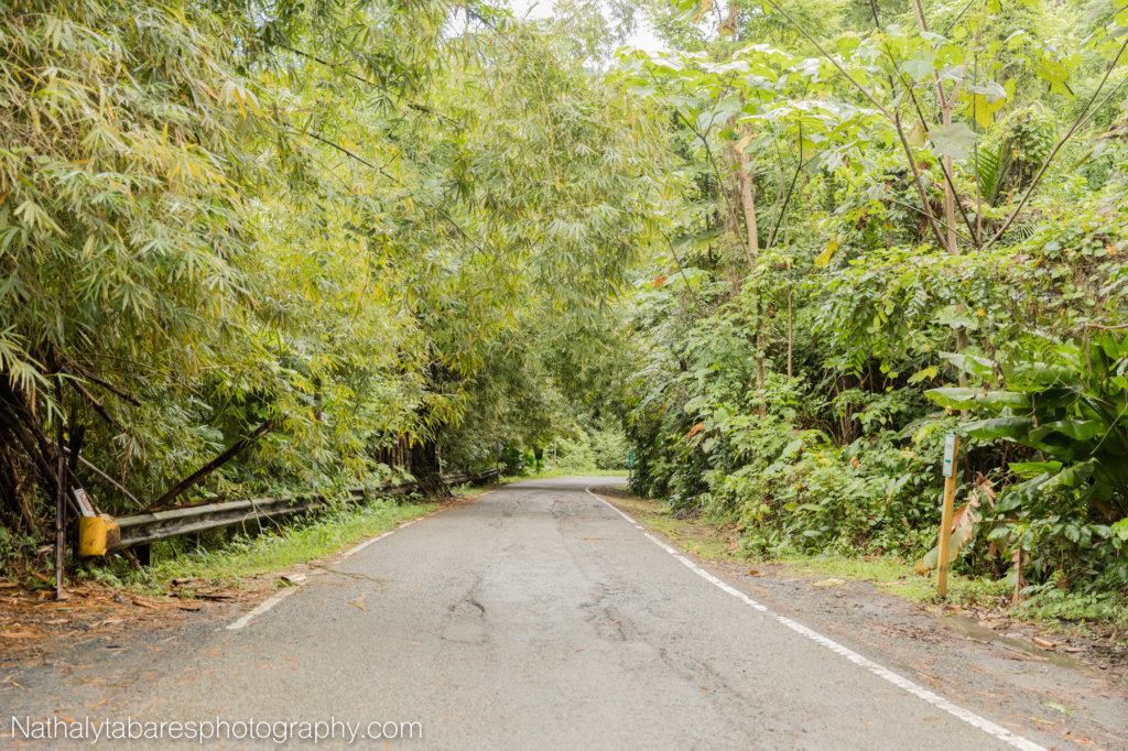 Road to the El Yunque National Forest